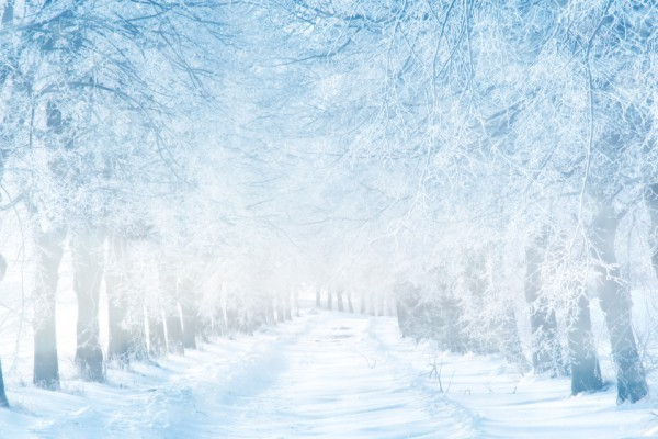Winter-Wonderland-image